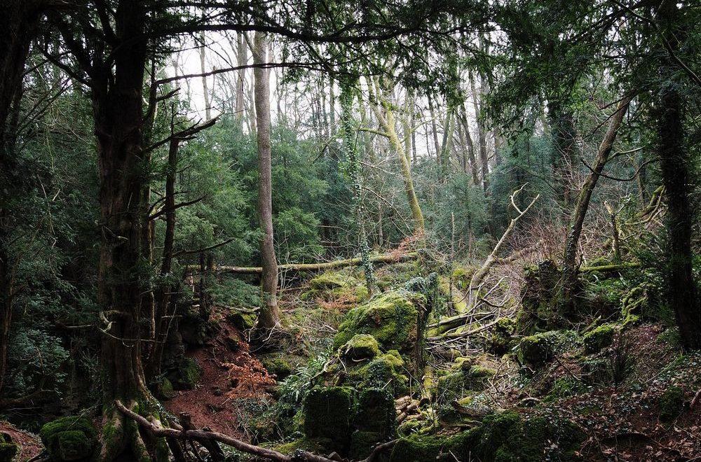 جنگل پازل وود