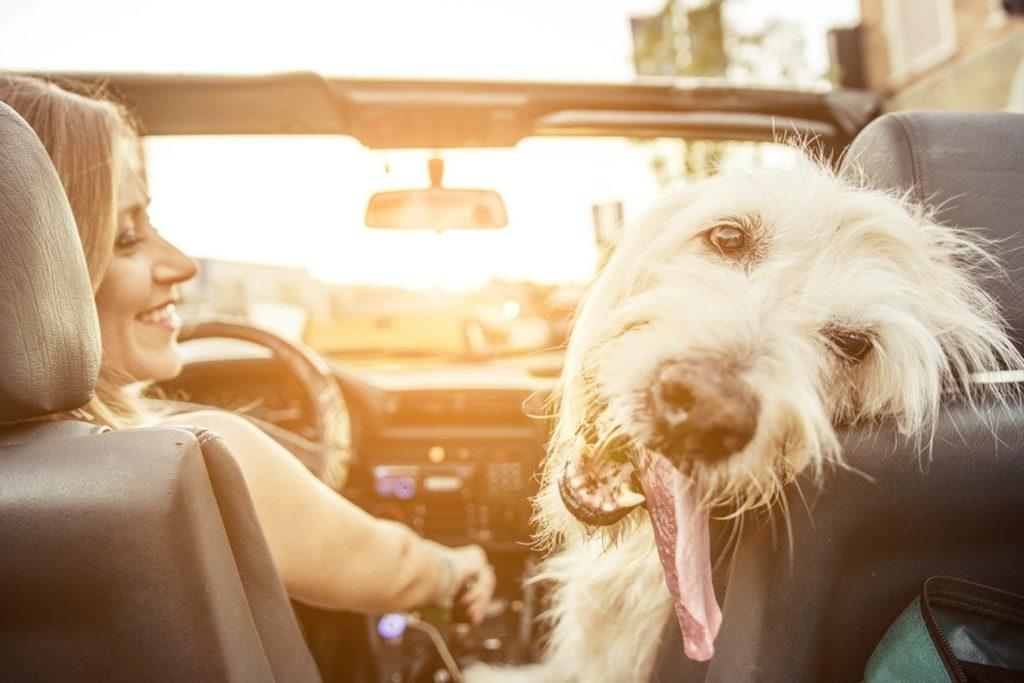 در این کشور حمل حیوان خانگی در خودرو جرم است