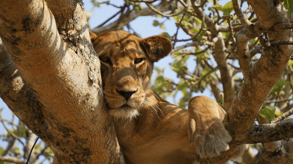 حیات وحش | آفریقای جنوبی