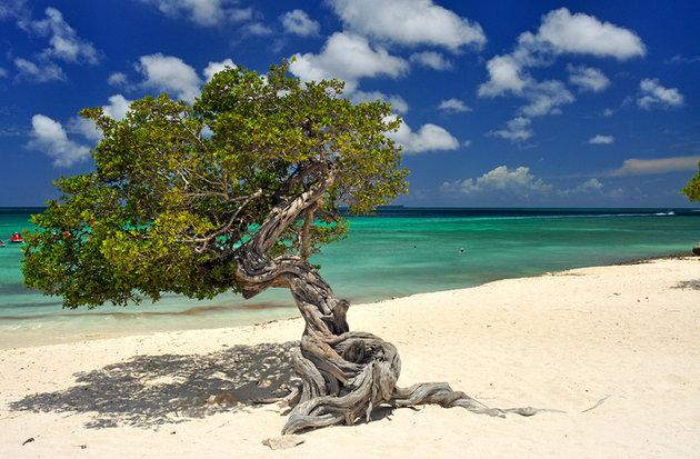 ساحل برتر و زیبا آروبا