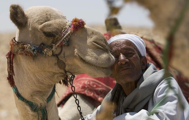 مصر | شترسواری