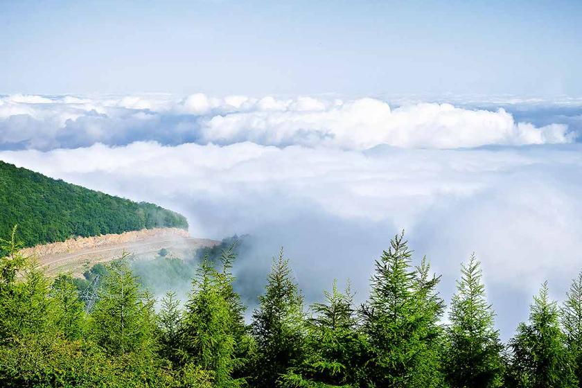 جنگل ابر شاهرود سمنان