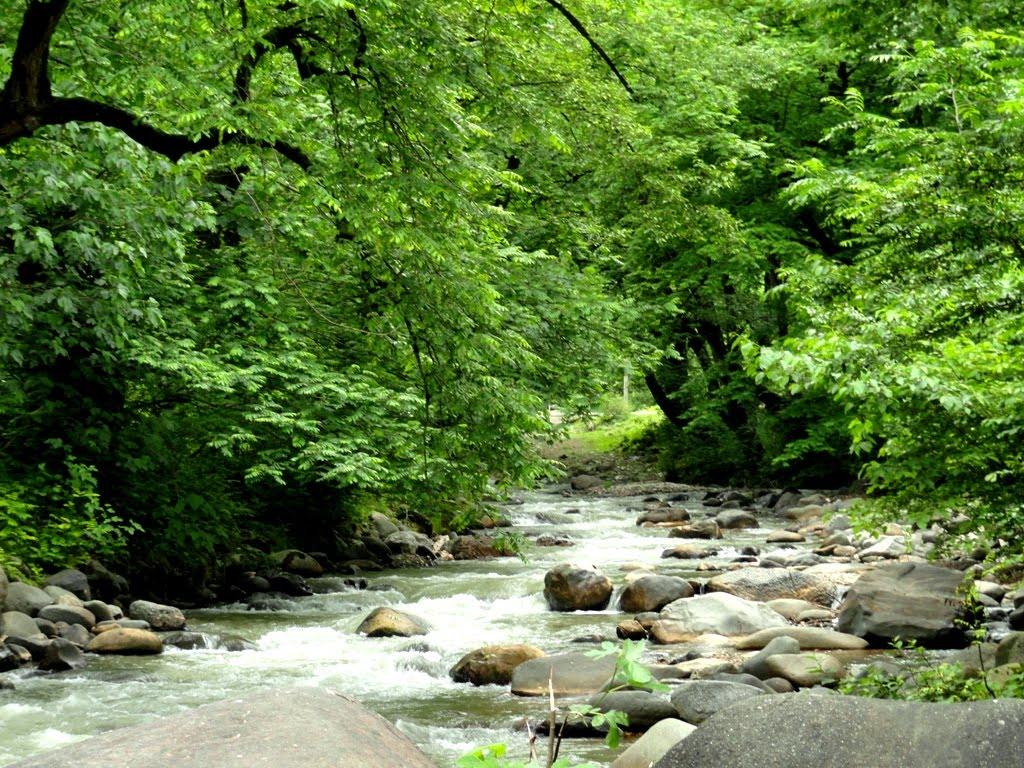 جنگل اسالم، اردبیل