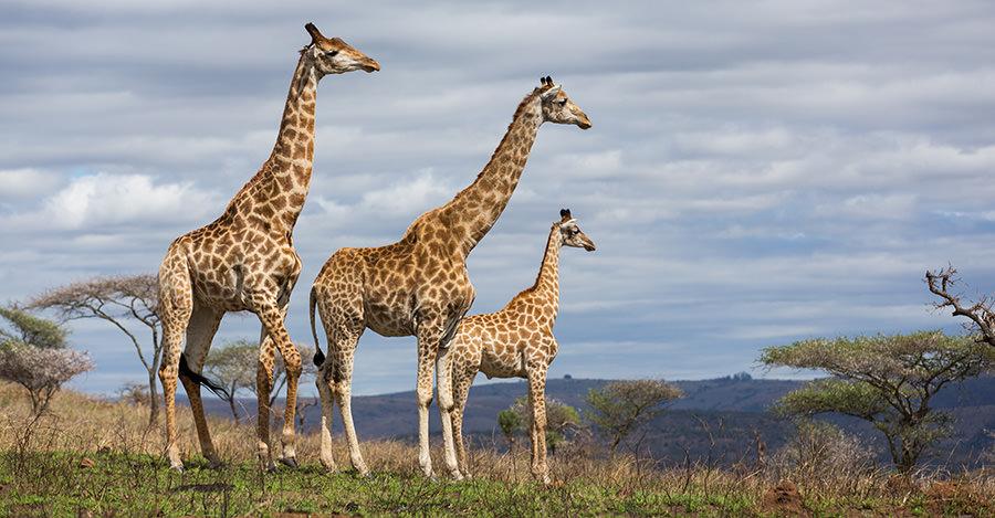 مکان های زیبا در آفریقای جنوبی
