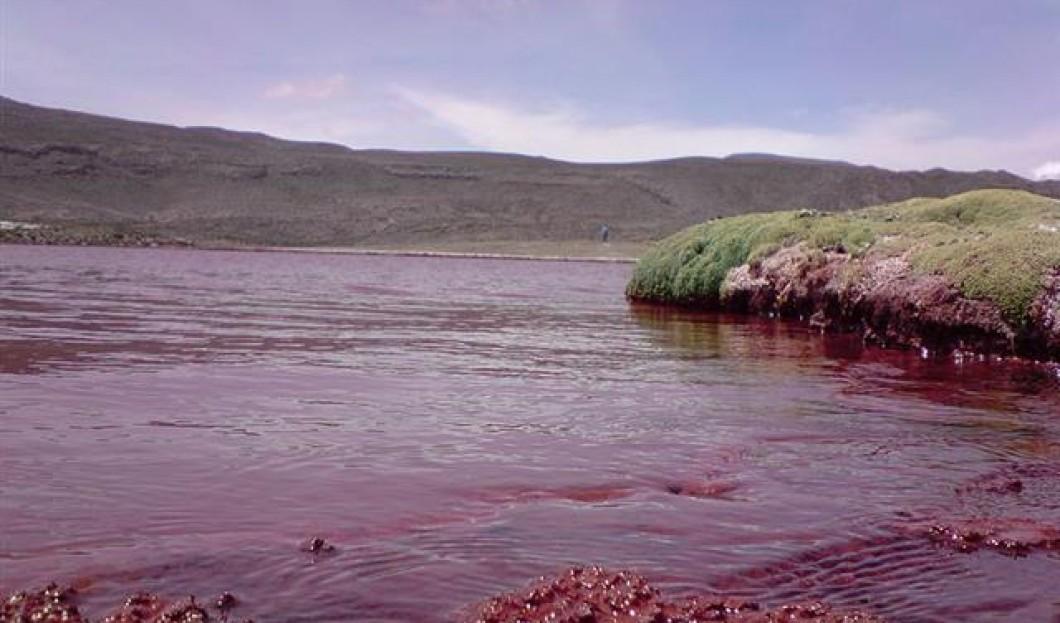 تالاب سرخ | شیلی