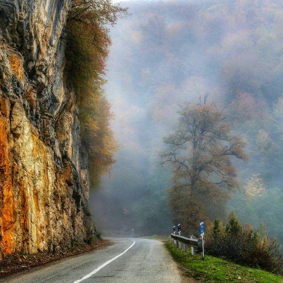 جنگل دالخانی رامسر مازندران