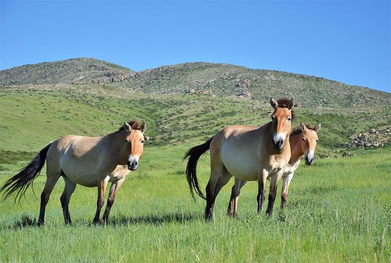 پارک ملی خوستای مغولستان