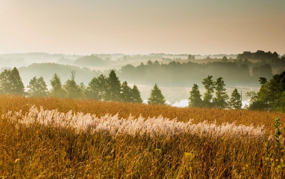 پارک ملی | لیتوانی