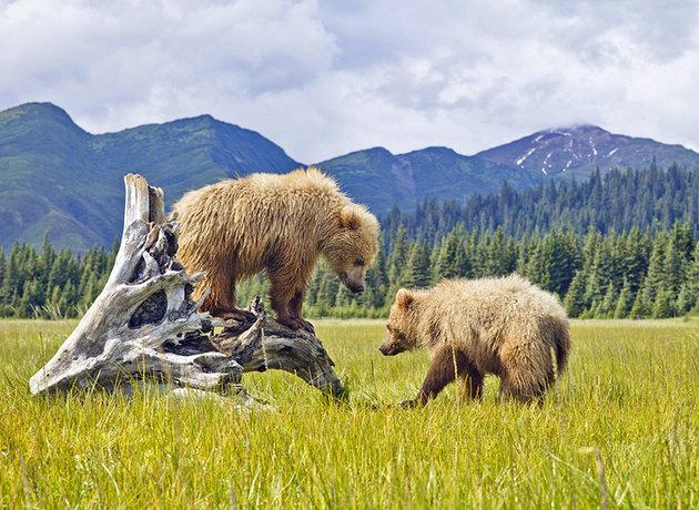 پارک ملی دِنالی  آلاسکا