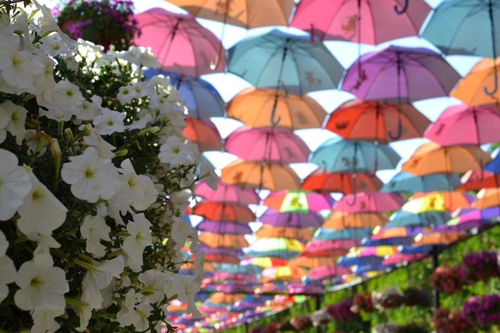 سفر به دبی - باغ گل دبی