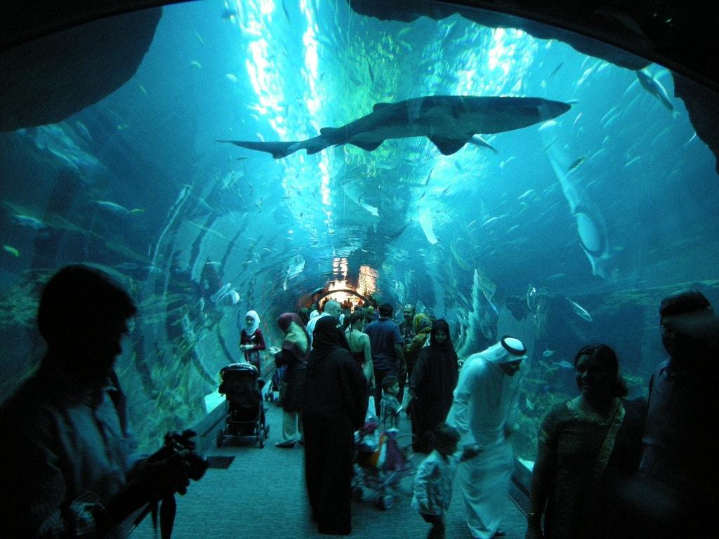 باغ وحش زیر آب در دبی