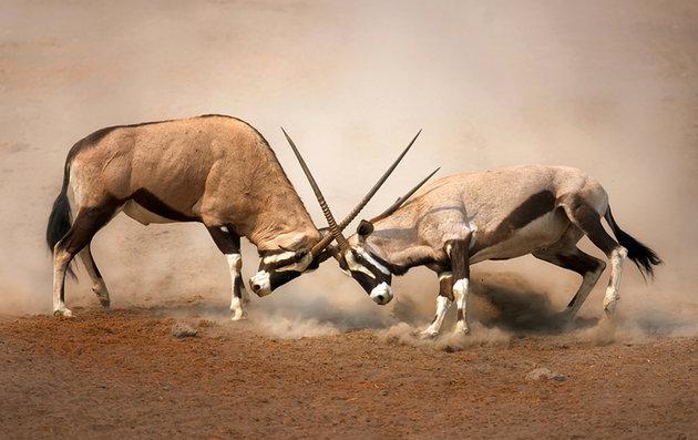 برترین پارک ملی حیات وحش در آفریقا