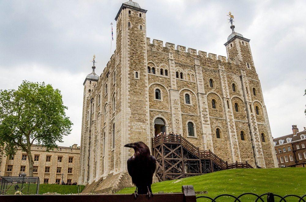 کلاغ های سیاه ،نگهبانان برج لندن | فروش آنلاین بلیط هواپیما به مقصد لندن