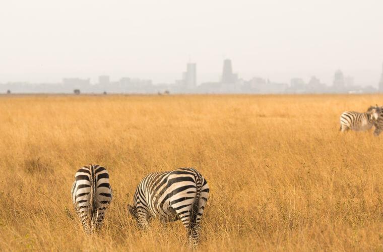 مقاصد محبوب آفریقا