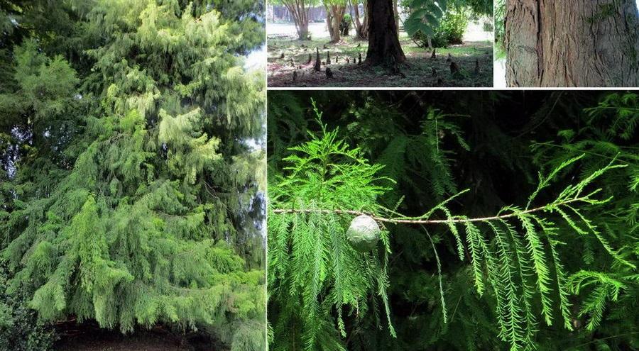 باغ گیاه شناسی از جاذبه های گردشگری نوشهر