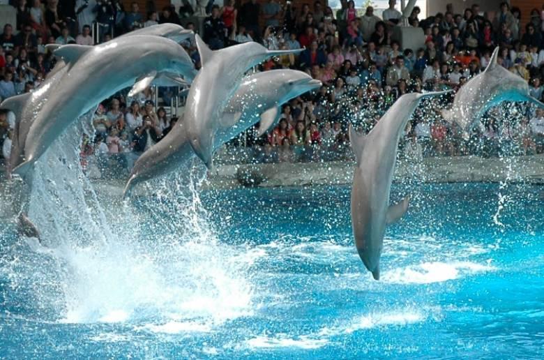 پارک دلفین وارنا