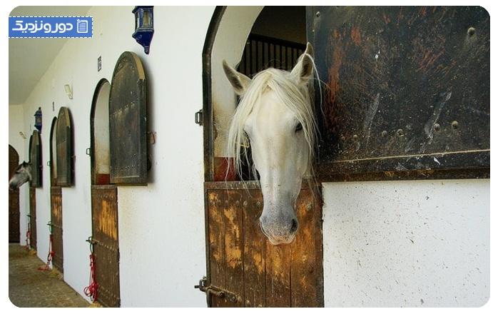 هتل اسب سواری اندلس