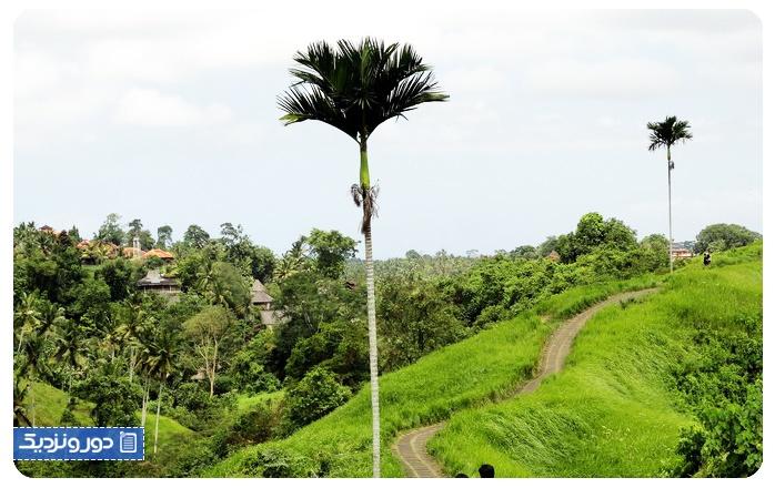 پیاده روی در کامپوآن ریج جاذبه دیدنی اوبود بالی