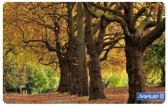 پیاده روی پاییز انگلستان
