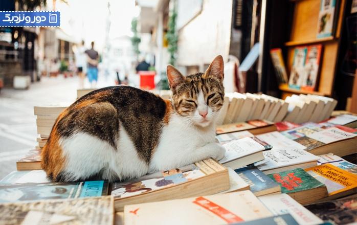 همه چیز درباره خیابان گربه های استانبول