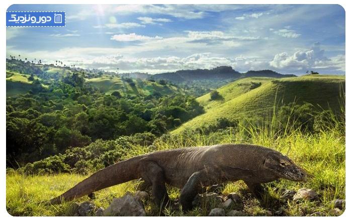 درباره پارک ملی اژدهای کومودو