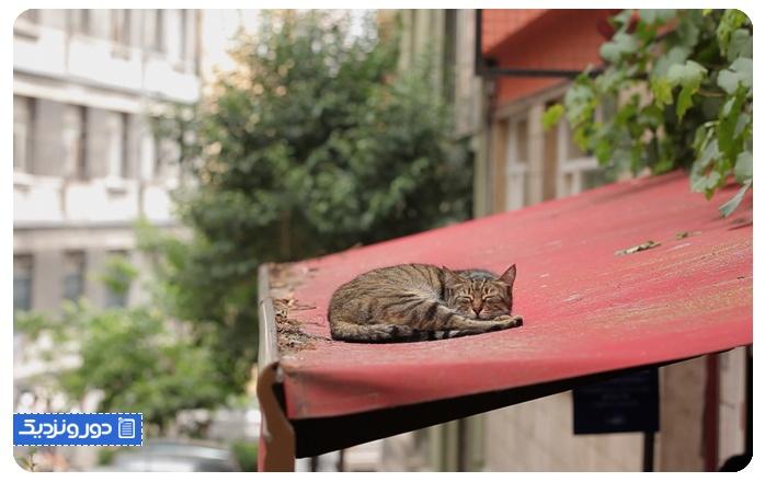 گریه های استانبول