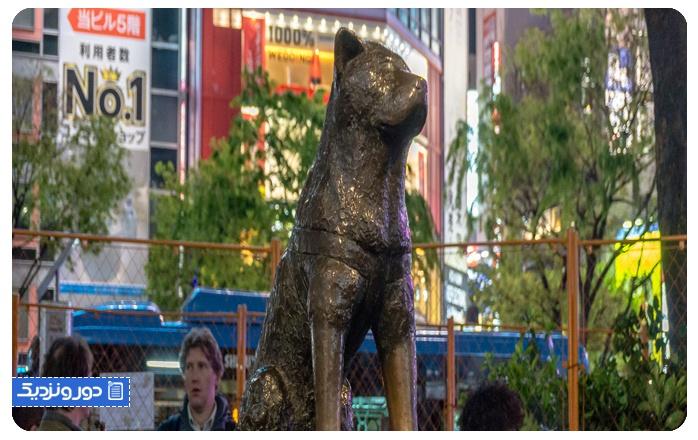 قصه هاچیکو سگ وفادار ژاپنی