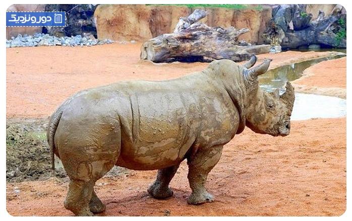 پارک ملی حیوانشناسی آفریقا