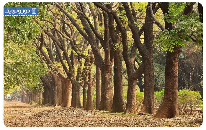پارک کابن Cubbon Park